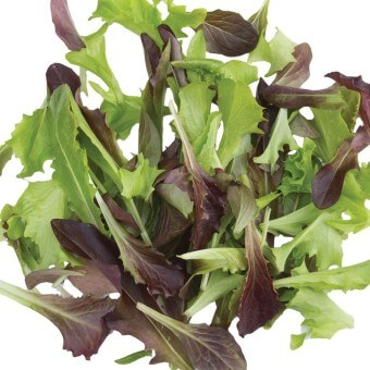 Fast and Furious Blend Organic Lettuce Seeds