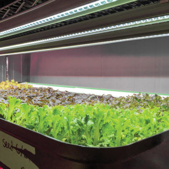 SunBlaster LED Grow Lights