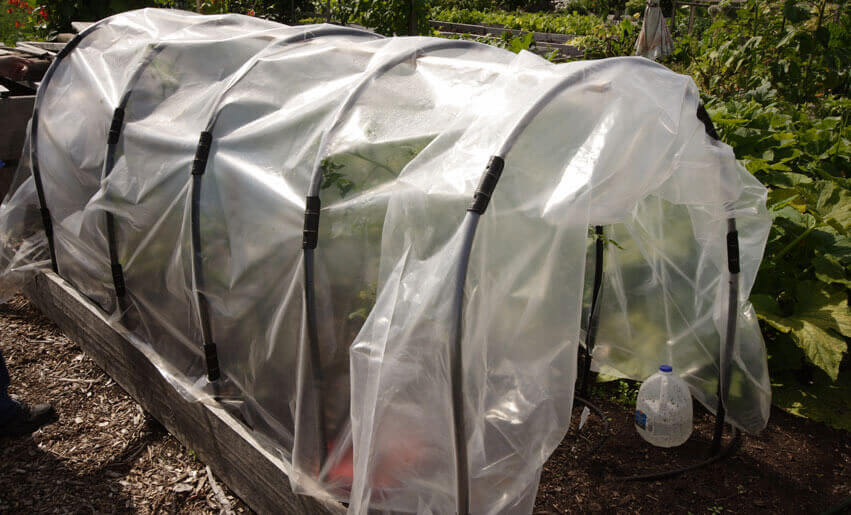 How to Build a Cloche Greenhouse