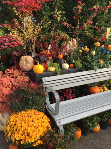 Bench in front of flowers and pumpkins at Minter Country Garden