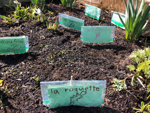 Plant tags in garden soil at Farm to School BC
