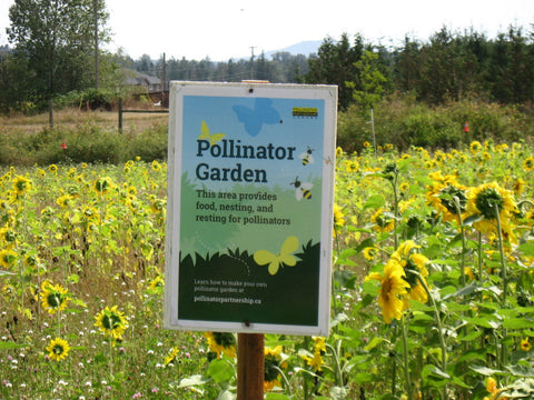 Pollinator Garden sign with sunflowers in background, Farmlands Trust Society (Greater Victoria)