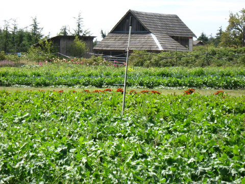Field to plate farm, green plants growing, from the Farmlands Trust Society in Greater Victoria