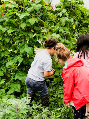 Youth learning to harvest from a plant at Farm to School BC.