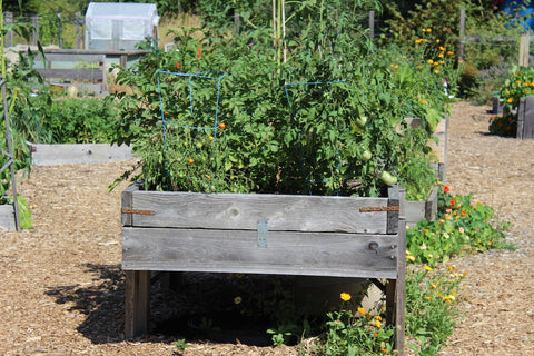 wooden box filled with plants at cowichan lake community garden