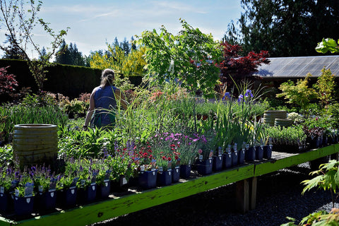 Beautiful selection of flowers and herbs at Tanglebank Gardens Abbotsford