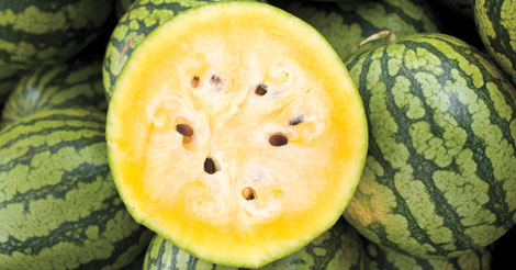 Yellow Doll Watermelon Seeds