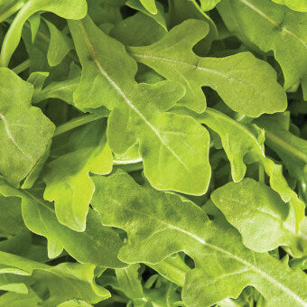 Wildfire Arugula Seeds MS490-3