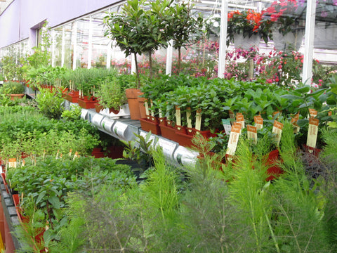 Seedlings ready for sale at Minter Country Garden