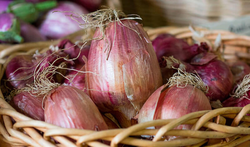 Heirloom onion seeds