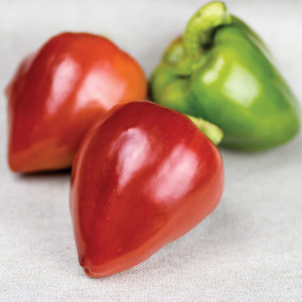 Sweetheart Bell Pepper Seeds