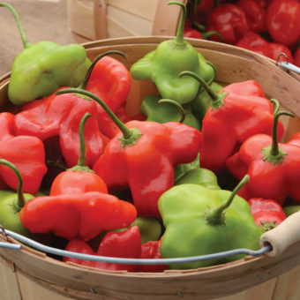 Mad Hatter Pepper Seeds