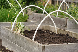 Raised-bed-prepared-for-cloche