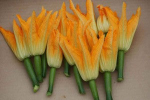 Female squash blossoms