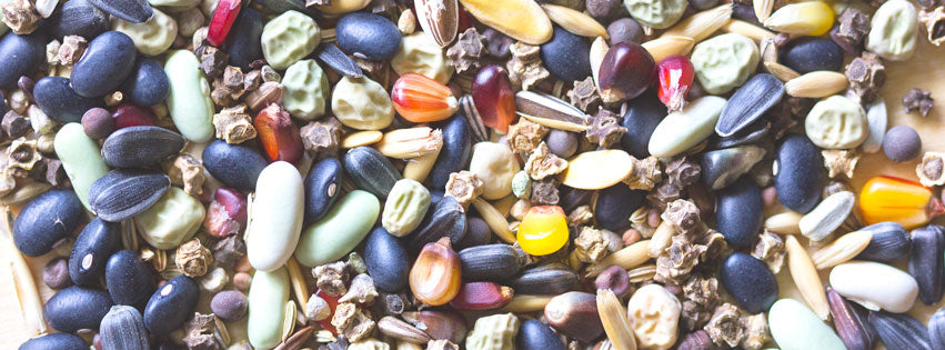 How to Save Garden Seeds