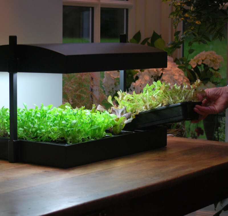 ZHG289A Growlight Garden 2