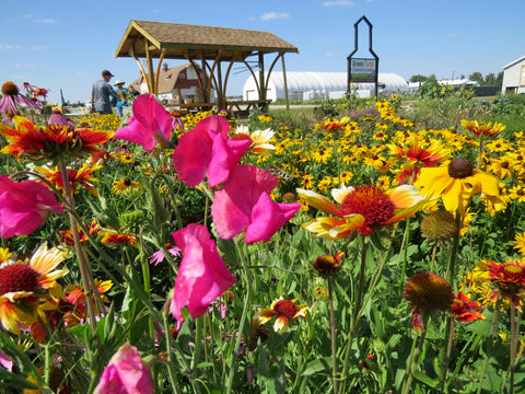 Summer Flower Blooms at the Green and Gold Community Garden