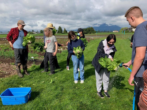 secondary students harvesting romaine lettuce at SSSF