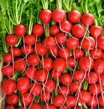 Quality Vegetable, Herb, Flower Seeds for Sale