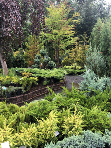 Garden Nursery with green foliage after a rain shower at Minter Country Garden