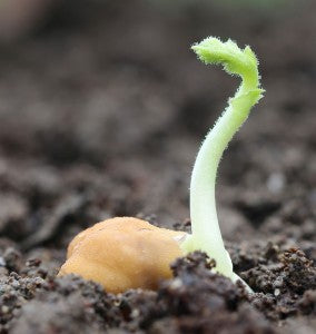 Seedling in Fertile Soil using soil amendments