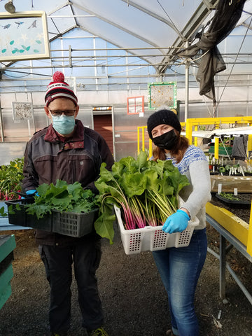 People holding harvested leafy greens at Providence Farm.