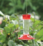Glass Hummingbird Feeder (10 oz)