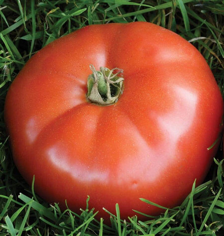 Alicante Tomato Seeds TM807-1