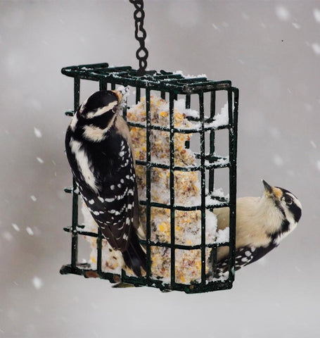 Pinebush Suet Cake Feeder