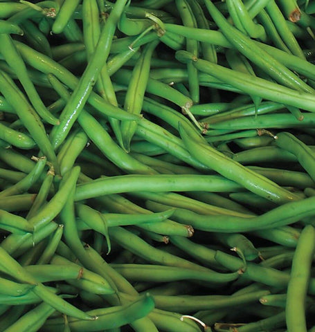 Blue Lake Pole Beans BN126 1