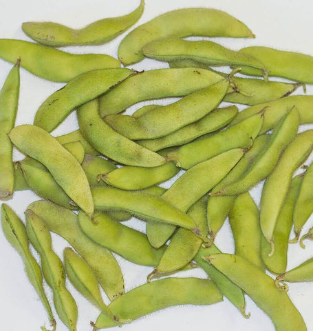 Kuroshinju Soybean Seeds