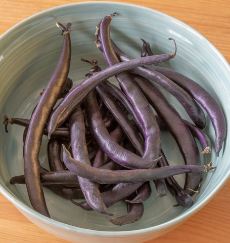 Purple Queen Bush Beanm Seeds