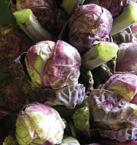 Red Ball Brussels sprouts seeds