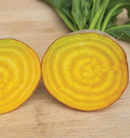 Touchstone Gold Organic Beet Seeds BT179 1