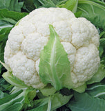 Skywalker Cauliflower Seeds