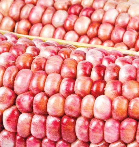 Pink Popcorn - 100g (approx  700 seeds)