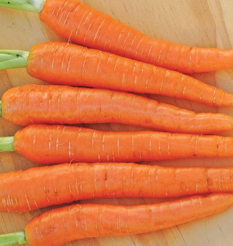 Jeanette Organic Carrot Seeds CR290 1