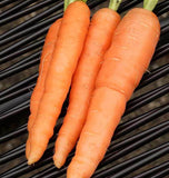 Scarlet Nantes Carrot Seeds CR296 2