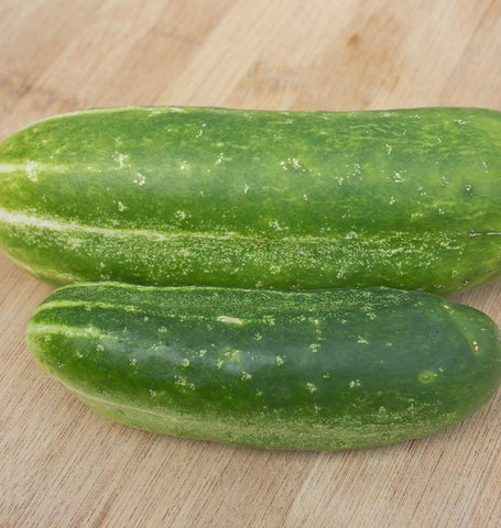 Wisconsin SMR-58 pickling cucumber seeds CU405 1