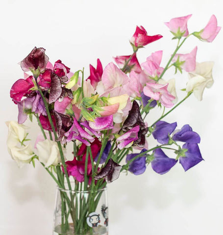 Spencer Ripple Mix Sweet Peas