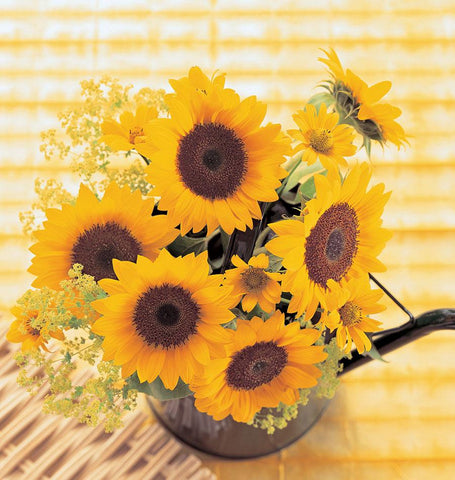 Sunrich Orange Sunflower Seeds