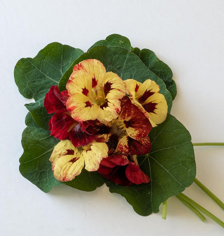 10 NASTURTIUM BLOODY MARY SEEDS Red /& Flecked Hardy Annual Flower Fast Depatch