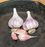 Chesnock Red Garlic