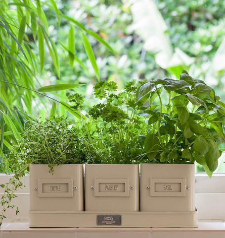 Herb Planters in a Tray HG393A-1