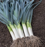 Curling Organic Leek Seeds