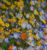 Alternative Lawn Wildflower Mix
