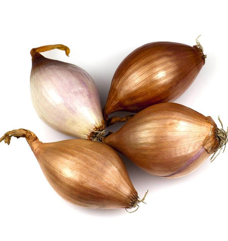 French Gourmet Shallot Sets ON583-1