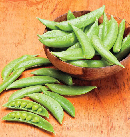 Sugar Daddy Organic Snap Pea Seeds PE618