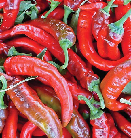 Matan Organic Pepper Seeds