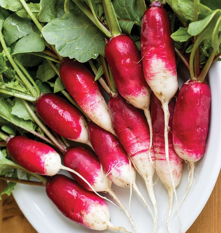 French Breakfast heirloom radish seeds